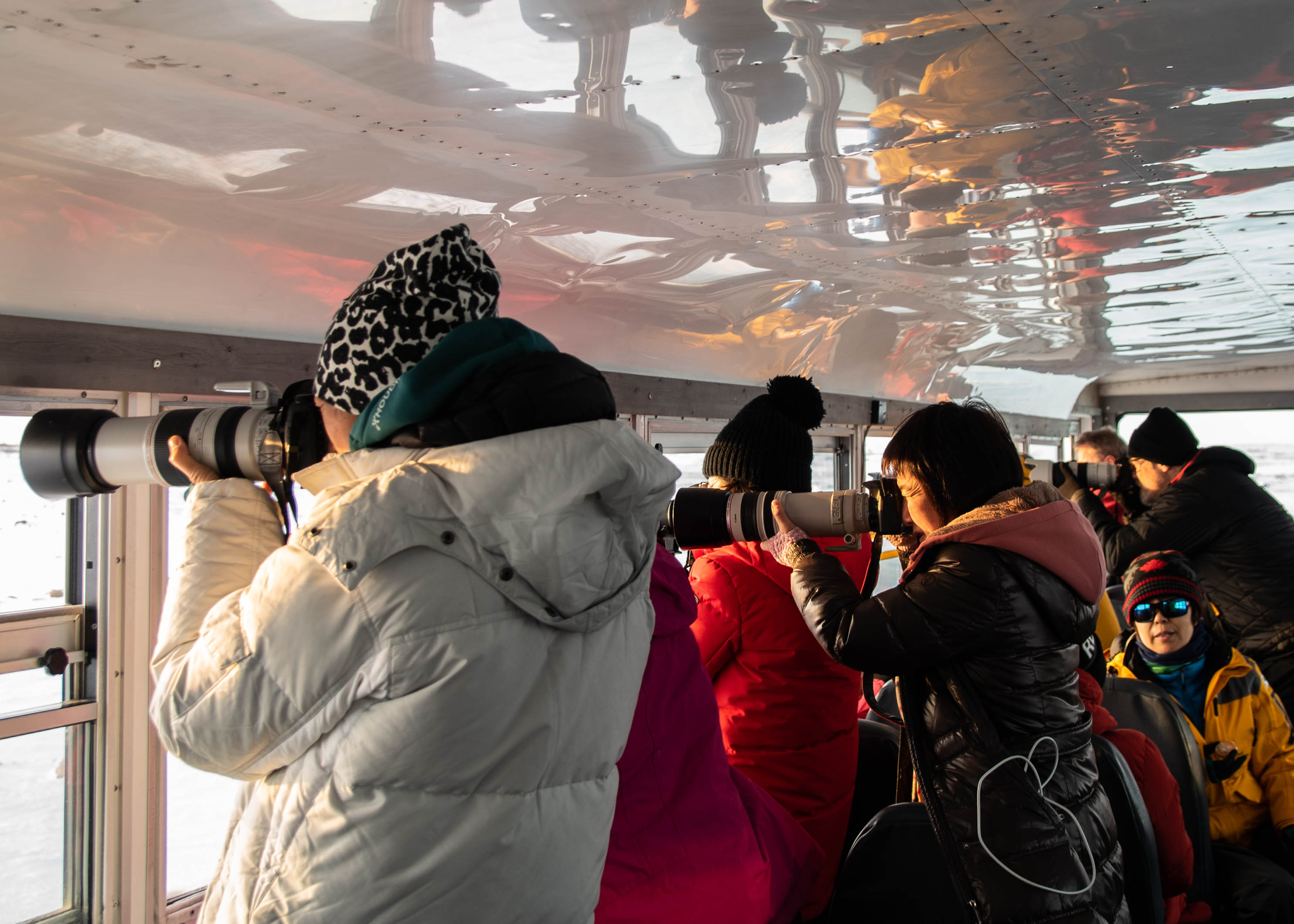 Guests lining up to take photos of polar bears.