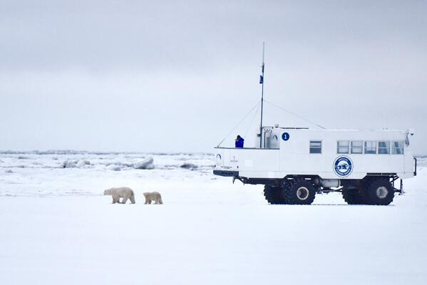 Buggy One studying polar bears in Churchill, Manitoba, Canada