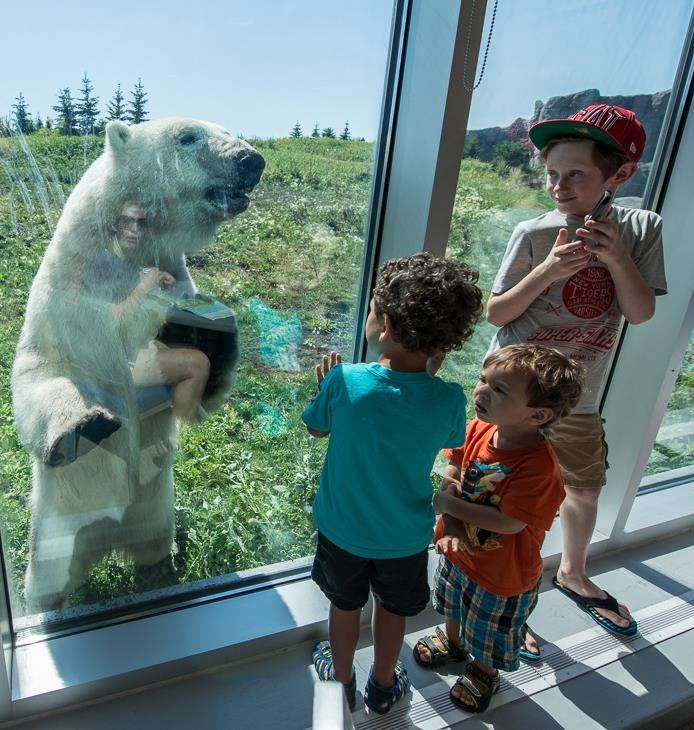 Kids looking at a polar bear through the glass at the zoo.