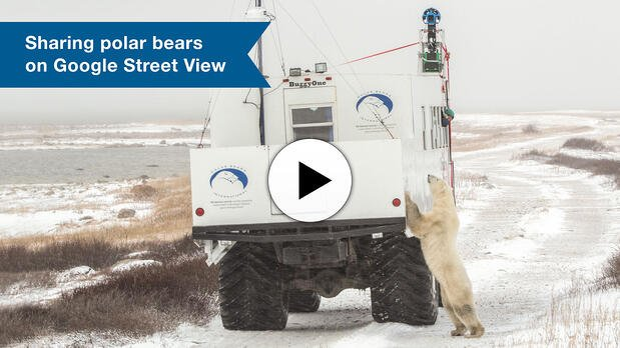 Video about polar bears on Google Street View
