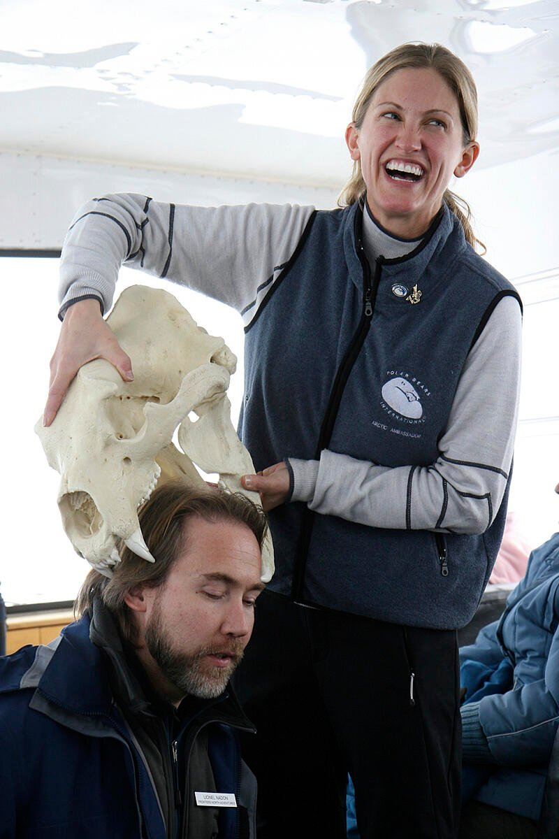 A scientist demonstrates that a polar bear can fit a human head in its jaws with a polar bear skull prop.