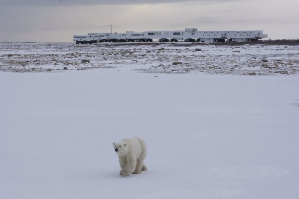 A polar bear walks towards the camera while the Tundra Buggy® Lodge sits on the horizon behind.