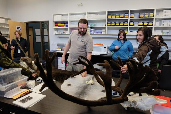 Large antlers being inspected by FNA staff at the zoo.