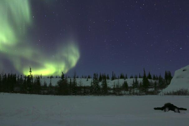 The northern lights above Churchill, Canada