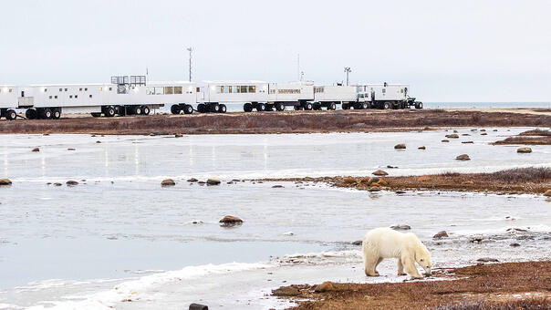 A polar bear outside of the Tundra Buggy Lodge in Churchill, Canada
