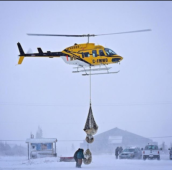 Helicopter taking a polar bear mom and cubs back out on to the Hudson Bay. Photo by Alex de Vries