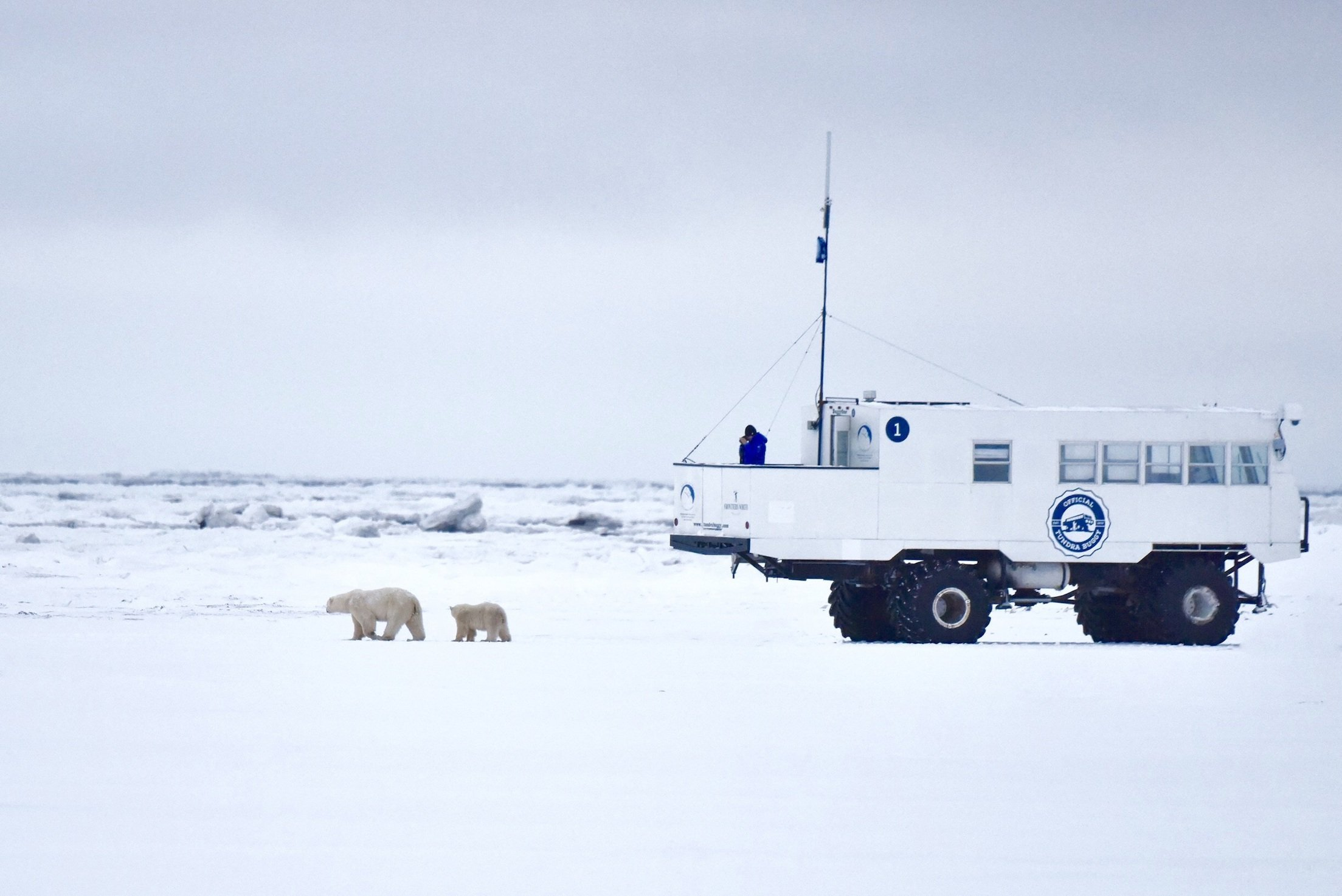 Polar Bears International's Buggy One, a roaming broadcast station in the Churchill Wildlife Management Area.
