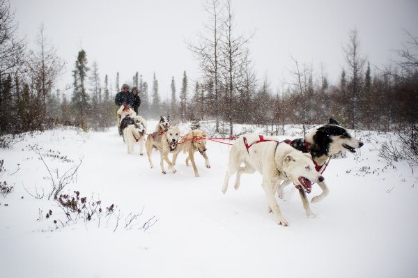 A team of dogs pull a sled through a forest in the winter.